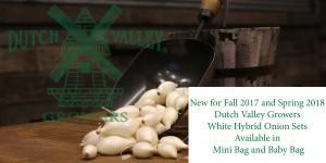DVG White Hybrid Onion Sets