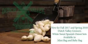 DVG White Sweet Spanish Onion Sets