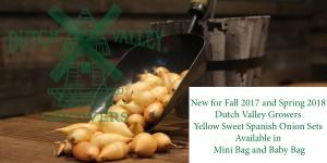 DVG Yellow Sweet Spanish Onion Sets